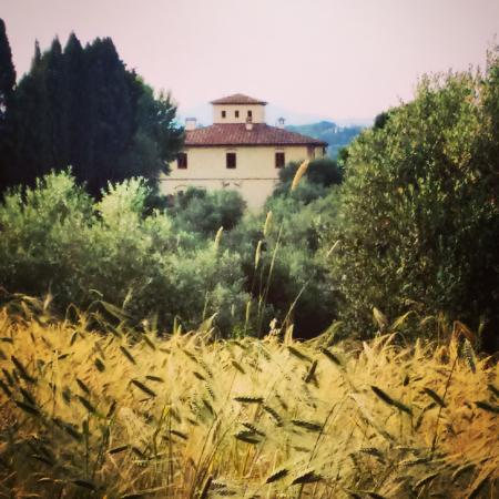 I Moricci: garden