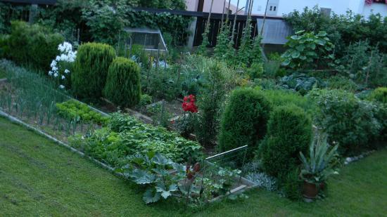 B&B Tereza: Widok z pokoju na ogródek Gospodyni Terezy