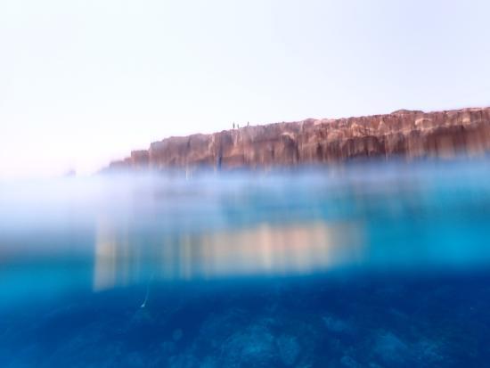 Dolphin Boat Safari: Going under.