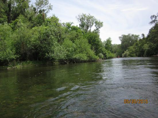 River Journey Adventures Day Tours: View along the river