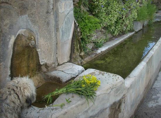Gotarta, إسبانيا: Fuente