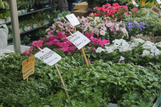 Mercato delle Cascine-Veggies and Herbs