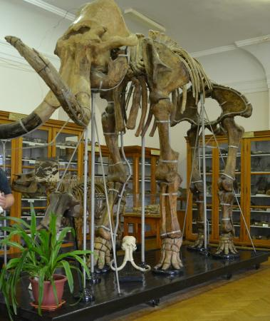 Paleontologic Museum