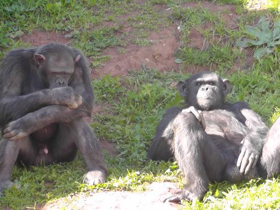 Jardin Zoologique National de Rabat : Just relaxing , looking at the humans.