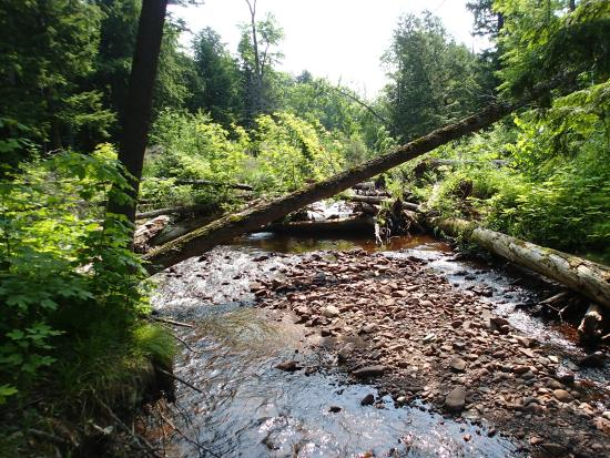 Little Carp River Trail