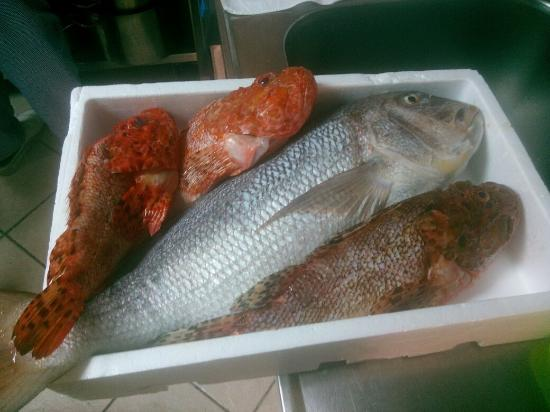 Yummy daily fresh fish bild fr n konoba for Daily fresh fish