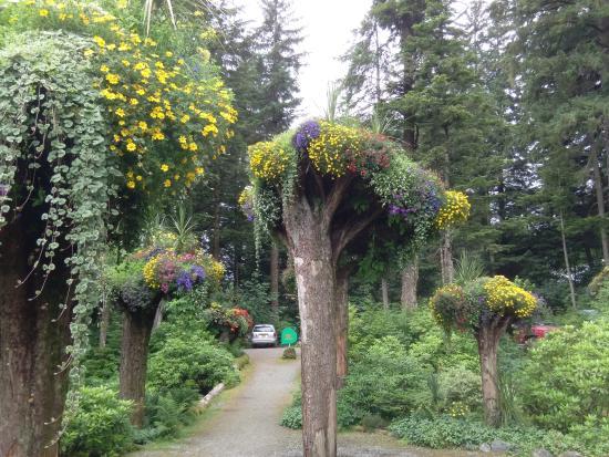 Upside Down Trees Picture Of Glacier Gardens Rainforest