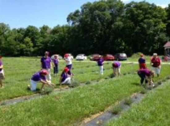 Thurman, IA: Enjoy picking your own lavender bouquet!