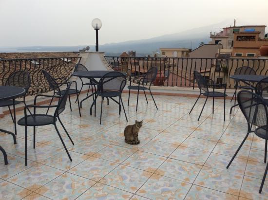 Vello D'Oro Hotel: Resident cat