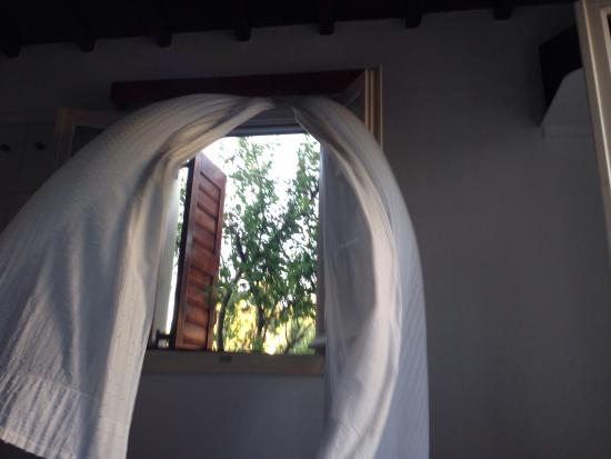 Villa Pinelopi Apartments & Rooms : WAKING UP TO THE BIRDS AND FRESH FRUIT TREES....