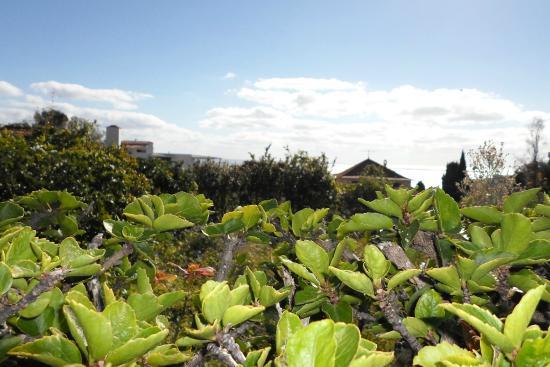 Vilas Oliveira: And garden