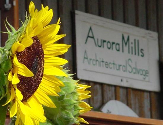 Aurora, OR : Sunflowers