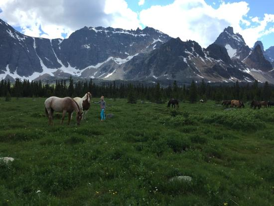 Tonquin Valley Backcountry Lodge: Horses grazing in meadow