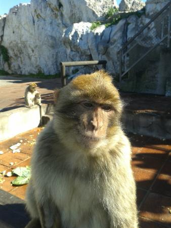 Gibraltar Rock Ape Tours