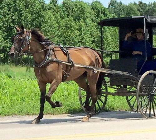 Amish Heritage Welcome Center and Museum: We arent supposed to photograph the Amish, but he waved, so I DID.