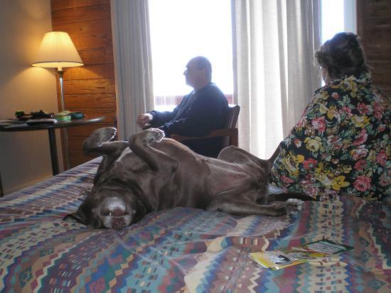 Cape Ann Motor Inn: Zoey taking a break.