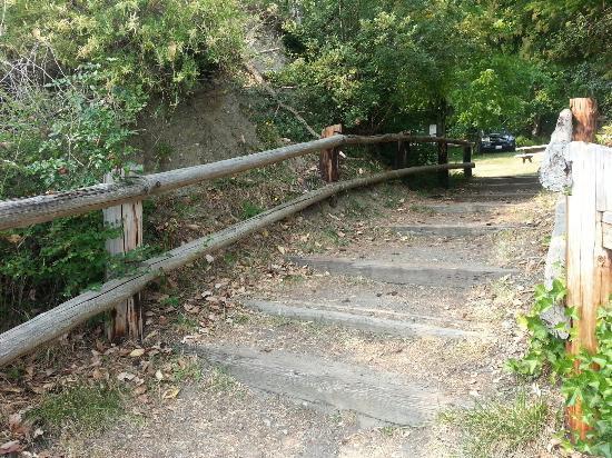 Camano Island State Park : Trail to the beach
