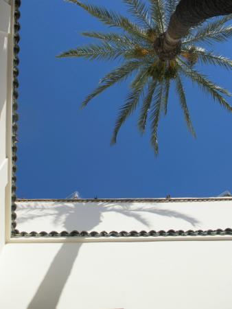 Zamzam Riad: The Palm in the Courtyard