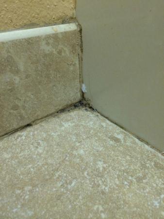 Staybridge Suites Fayetteville/Univ Of Arkansas: Mold in bathroom?