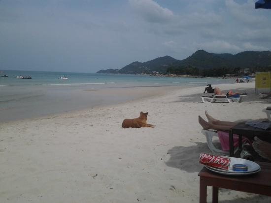 Samui Beach Apartments: Nice beach
