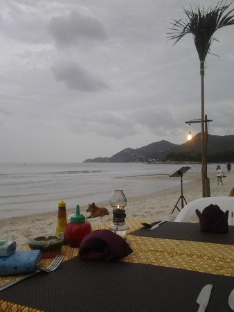 Samui Beach Apartments: Dinning at beach for dinner