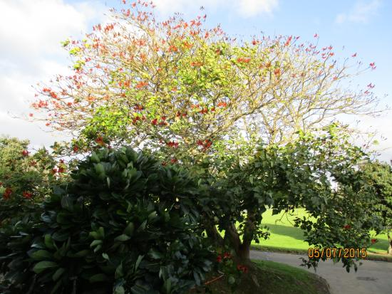 Auckland Takapuna Oaks: Woken to Tui's in the mornings in this tree outside room