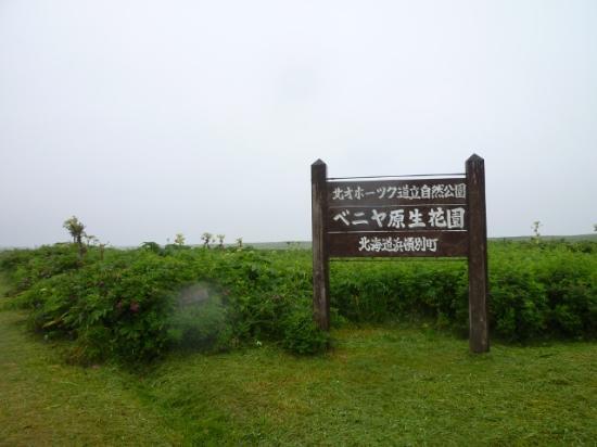 Hamatonbetsu-cho, Giappone: 原生花園の遊歩道