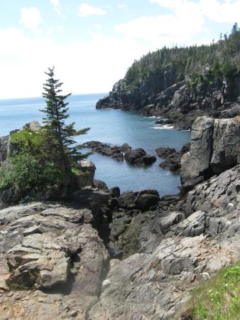 Quoddy Head State Park: Cliff views at Quoddy Park.  We saw eagles and seals along the way!