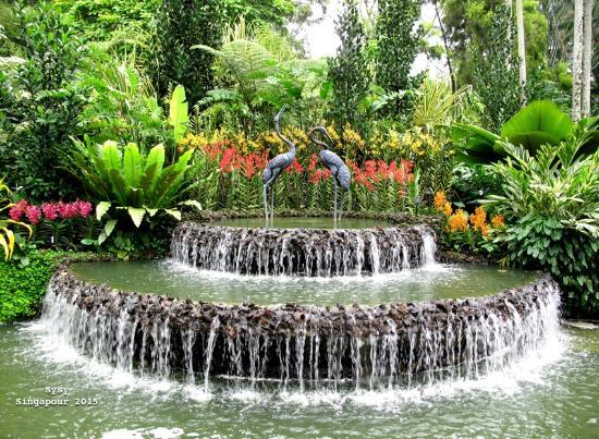 Floating white flower picture of singapore botanic for Au jardin singapore wedding