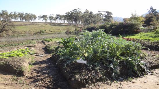 Old Town Tulbagh : COMMUNITY GARDENS