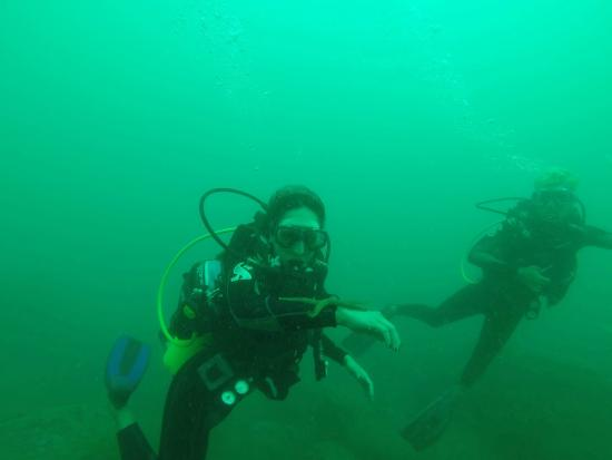 Divers Land Dive Club