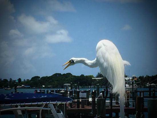 Jensen's Marina Boat Rentals: Beautiful wildlife everywhere