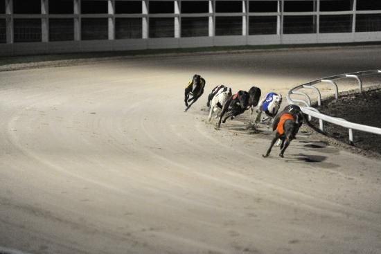 Towcester Racecourse Experience The Thrill Of Greyhound Racing