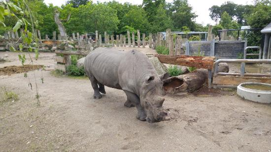 zoo i Sjælland tivoli i Odense