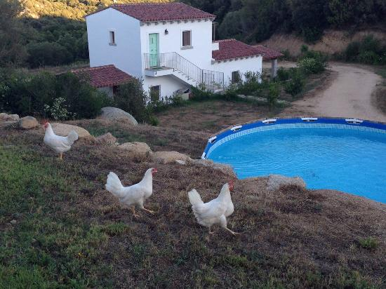 Agriturismo Terre di l'Alcu : Chicken is out tonight!