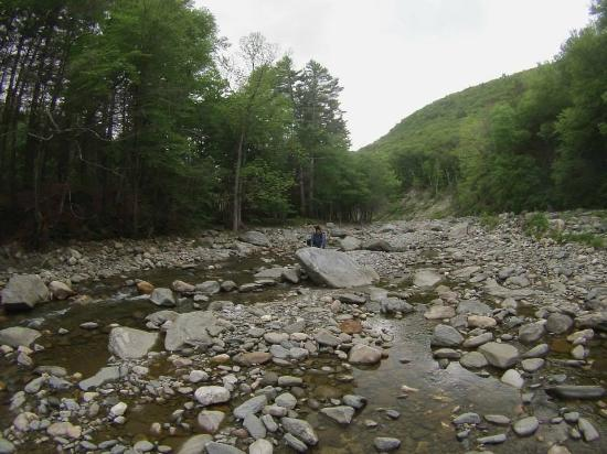 Mohawk Trail State Forest : Cold River