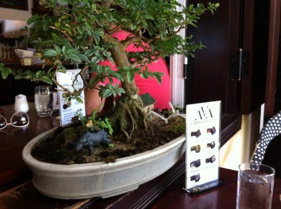 Bonsai Everywhere Picture Of Mia Coffee Hoi An Tripadvisor