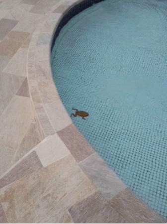 Le Grand Courlan Spa Resort: Frog in the pool.