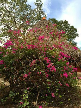 Hotel Playa Negra: Beautiful flowers