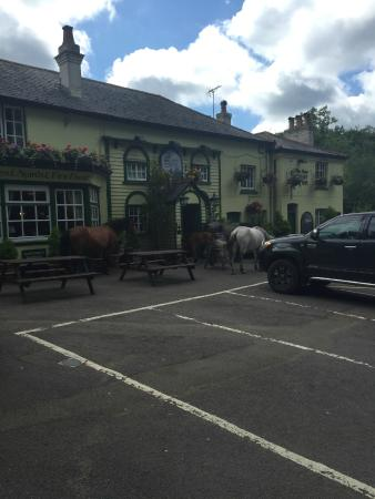 The New Forest Inn: Always ponies around