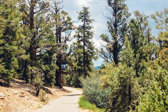Big Bear Discovery Center : The hike to the Discovery Center