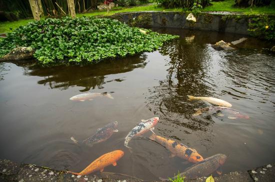Estanques Con Peces Picture Of Restaurante Rancho Del Sapito - Estanques-peces