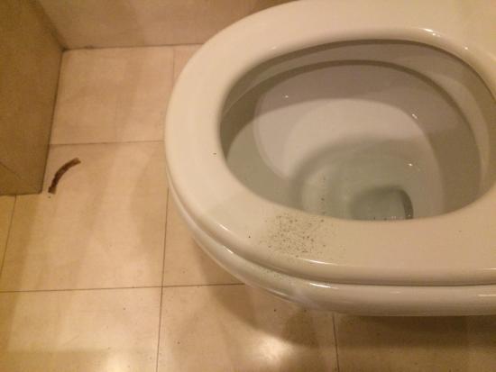 Rayfont Celebrity Hotel & Apartment Shanghai : Poudre bizarre sur les WC, cendres... Et un reste bizarre par terre... C est pas glam.