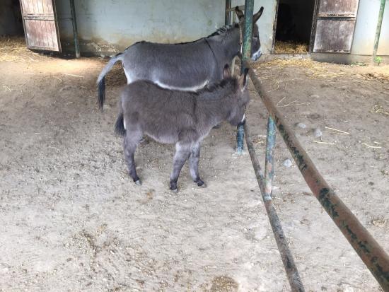 Esel- und Landspielhof: Donkey Park (Eselpark)