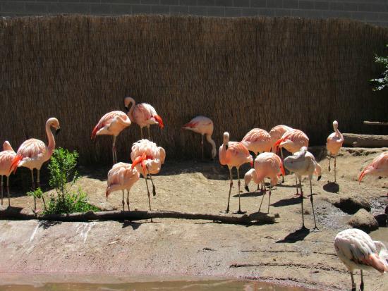Idaho Falls Zoo at Tautphaus Park : Flamingo haven