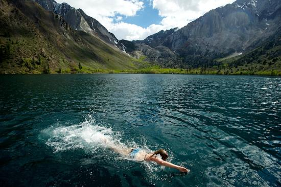 Polar bear swimming in convict lake picture of convict for Convict lake fishing