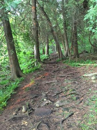 Eagle Trail : root exposed on the ground