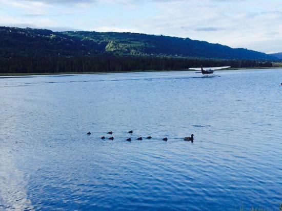 Homer Floatplane Lodge: photo0.jpg