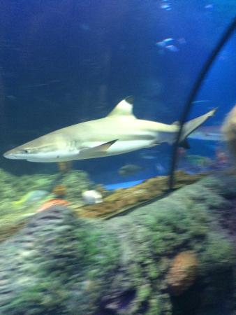 photo0.jpg - Picture of Sea Life Manchester, Stretford - TripAdvisor