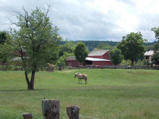 Lambertville, Νιού Τζέρσεϊ: HORSES AND OTHER ANIMALS CAN BE SEEN